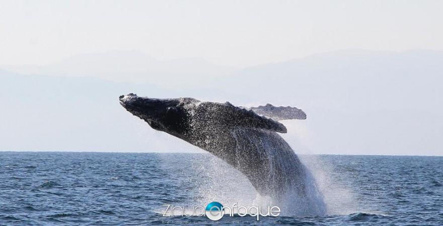 ballena 002