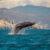 Ballenas en Guerrero